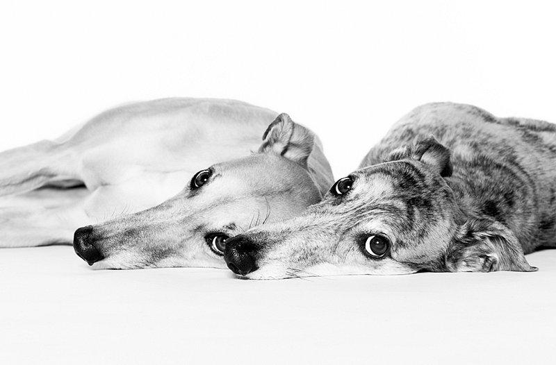 Dogs06.jpg