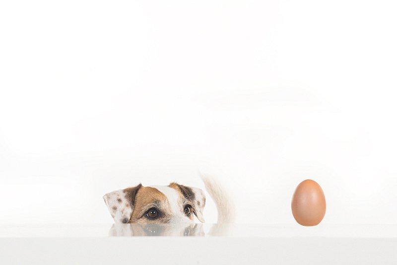 Dogs07.jpg