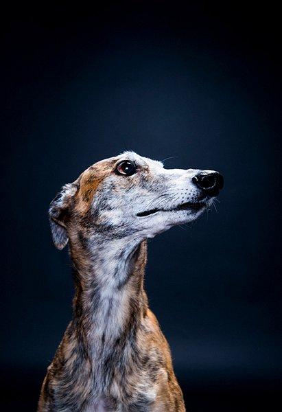 Dogs05.jpg