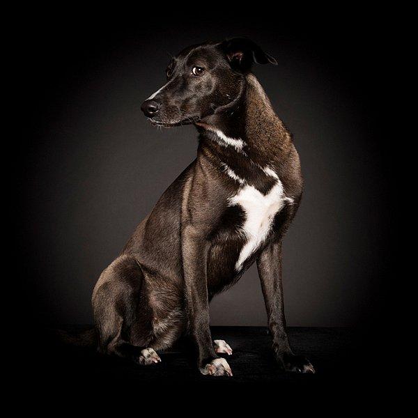 Dogs09.jpg